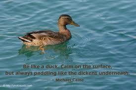 Lead like a duck