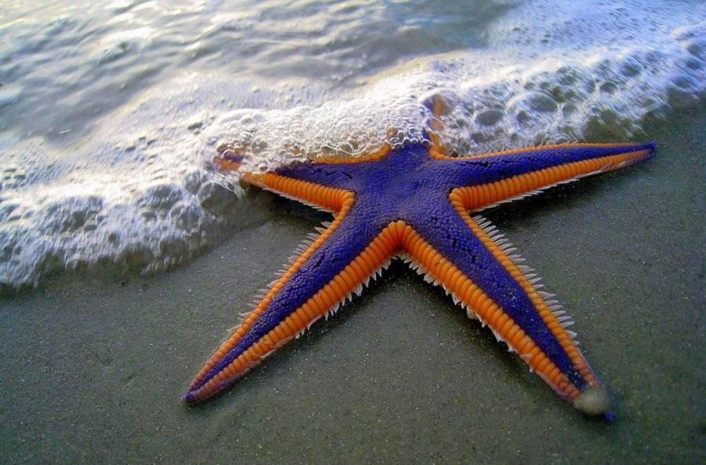 Make a difference, one starfish at a time