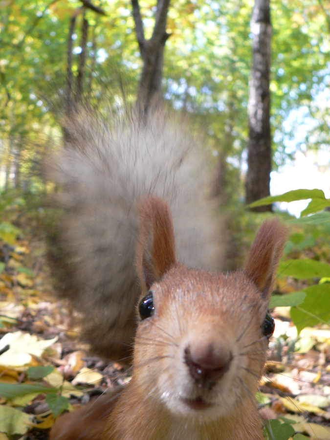 The best leaders don't chase squirrels