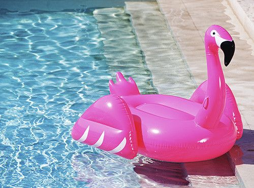 Why a pink flamingo is an essential leadership tool
