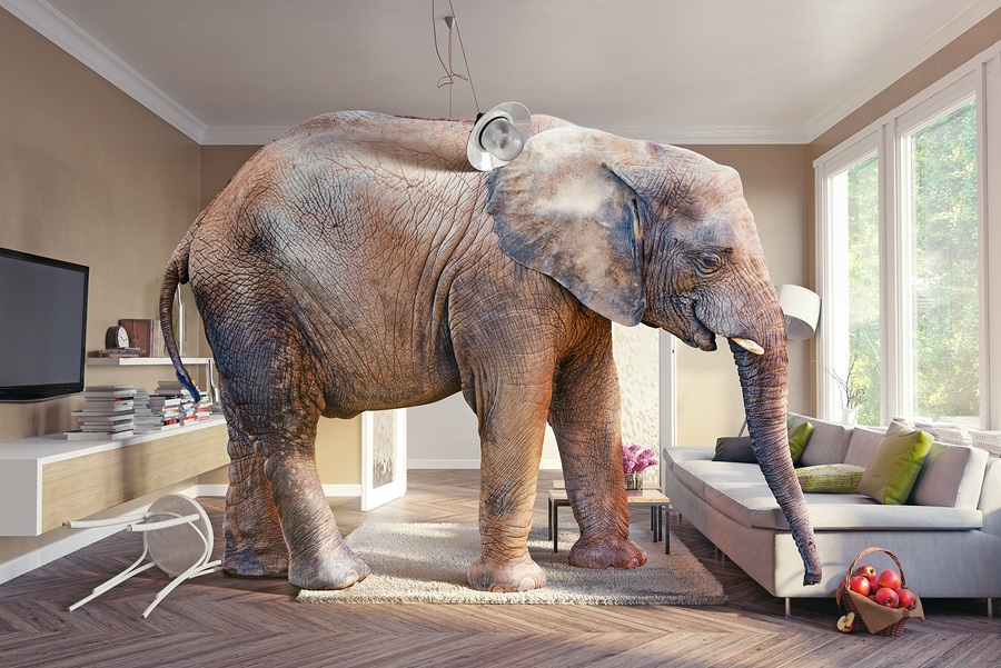 "How to handle the ""elephant in the middle of the living room"""